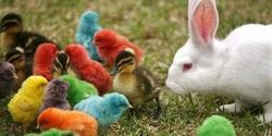 Bunnies, and Ducklings, and Chicks, Don't Buy...For Easter!