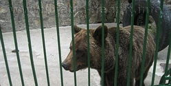 End animal abuse in Piatra Neamt Zoo, Romania