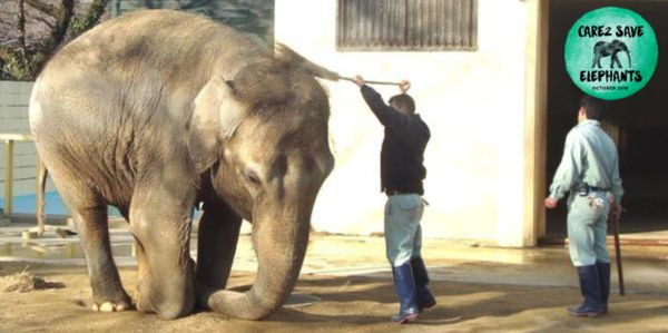 Himeko, depressed elephant at Japanese zoo