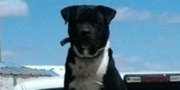 HELP save our family dog from being murdered