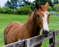 Ban Horse Slaughter In Canada!