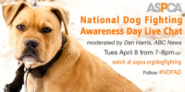 Spread Awareness about National Dog Fighting Awareness Day