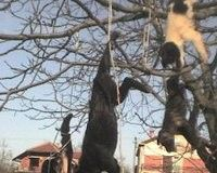Stop the killing of dogs by serbian hunters!