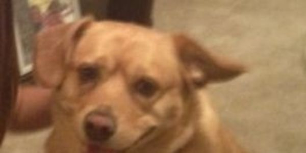San Antonio: Stop The Injustice! Don't Execute Buddy The Dog And Send Him Home!