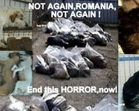 Romania - do not legalize the mass killings of stray animals.Say NO to euthanasia of healthy animals