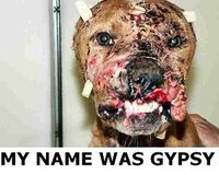 THE STORY BEHIND THE FACE - GYPSY'S LAW