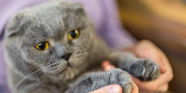 Woman holding cat's paws