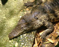 China: Stop Trade of Crocodiles for Meat