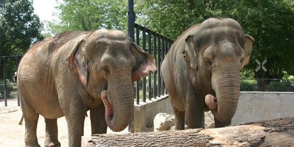 petition: DEMAND Little Rock Zoo Send Sophie, Babe and Zina