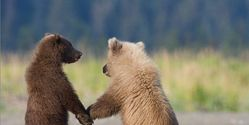 TO END THE CRUEL ACT OF BEAR BAITING ~~ URGENT~~ FB EVENT MONDAY, MARCH 31ST.