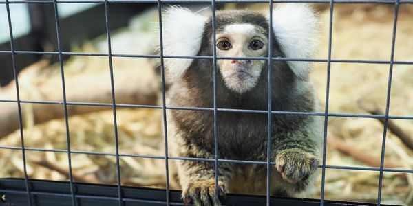 petition: Monkeys Are Not Pets  Sign to Ban Private Monkey