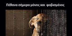 Save Greece's Stray Animals