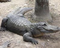 Don't Hunt Alligators in Wildlife Refuge