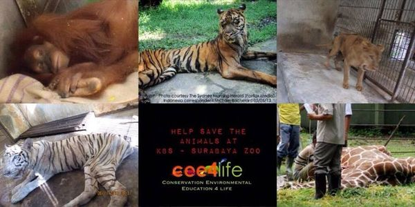 Surabaya Zoo Animal Welfare Action - Cee4life