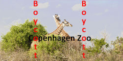 Boycott Copenhagen Zoo, because of killing giraffe Marius.