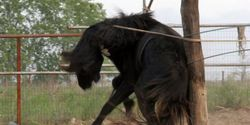 STOP CRUELTY AND SLAUGHTER OF HORSES IN ROMANIA