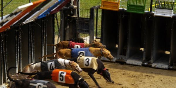 Withhold Support for Dog Racing!
