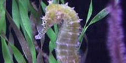 Ban the Trade in Seahorses