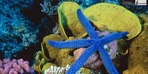 Command the US Congress to Protect Our Coral Reefs