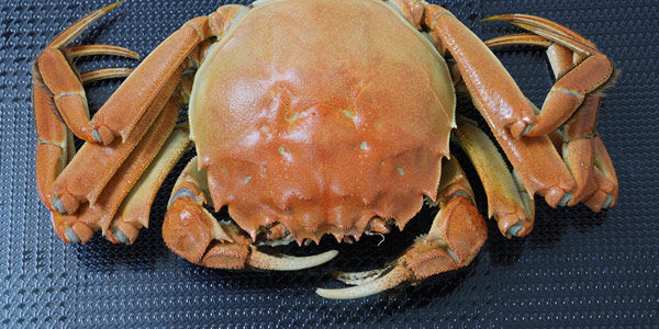 Demand China Get Rid of Live Crab Vending Machines