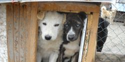 tell Croatian authoraties to change the animal adoption law