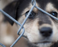 Don't Let Missouri Puppy Mills Thrive, Keep Prop B in Place