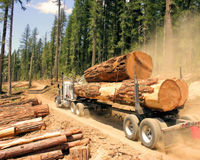 Reverse Obama Administration's Approval of Tongass Logging