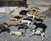 Catch and prosecute the poisoner of 23 shelter dogs in Siteia, Crete