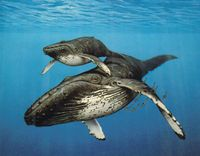 Please Save The Kimberley and Humpback Whales