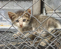 URGENT! Act Now to Save Feral Cats