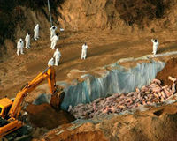 One Million Pigs Buried Alive in South Korea