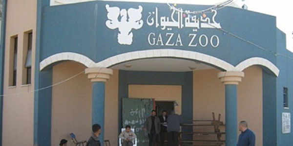Don't let those animals in the Gaza Zoo become victims of the war.