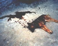 http://dingo.care2.com/pictures/petition_images/petition/328/905382-1189885913-main.jpg