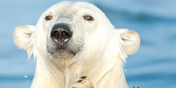Free Arturo, Argentina's only polar bear, from living hell!!!