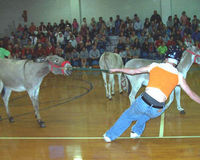 Ban!! Donkey Basketball As School Fundraisers