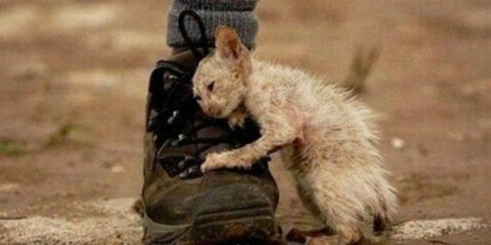 Zara needs your help: Demand an End to the Violent Mass Killing and Torture of Homeless Animals in Uzbekistan, Now!