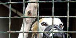 Close the Tucson Greyhound Park