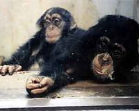 FLORIDA: HR 1513 - THE GREAT APE PROTECTION ACT