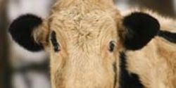 Close Live Animal Export Loopholes for Australia!