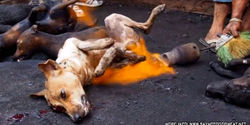 In Sulawesi, Indonesia, at Tomohon Market dogs are smashed on the head a couple of times with a lump