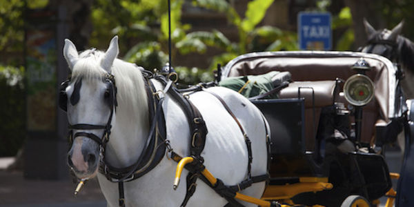 STOP HORSE DRAWN CARRIAGE RIDES IN DOWNTOWN LAS VEGAS!