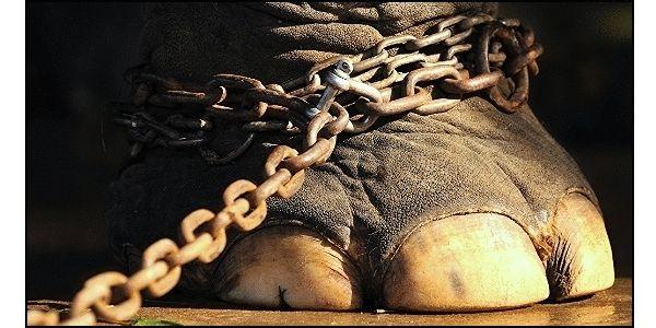 Stop Sponsoring Circus Cruelty