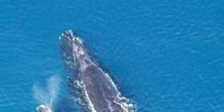Obama Decision To Kill Whales and Dolphins on A Huge Scale For Big Oil And The Navy! Stop Them From
