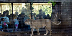 Stop London Zoo 'Lates'