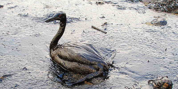 Tell Kinder Morgan: Oil Spills Are NOT