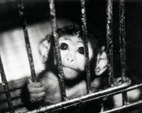 Restore the Animal Welfare Act