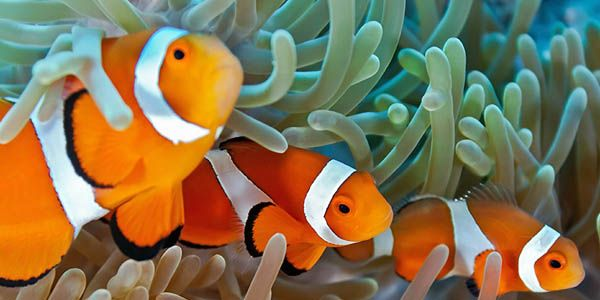 Australia: Don't allow a coal mine to destroy the Great Barrier Reef
