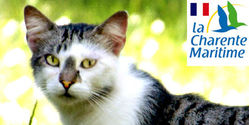 HELP MAKE FRANCE A CAT-FRIENDLY COUNTRY.