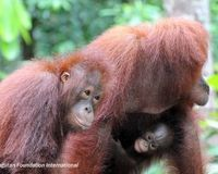 Say 'NO!' to Palm Oil!