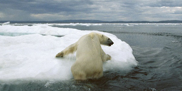 Help Protect Polar Bears from Climate Change